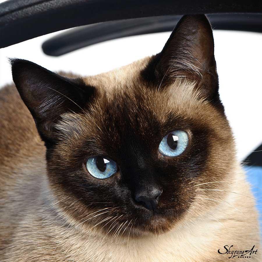Exemple de photo parfaite pour réaliser un portrait animalier
