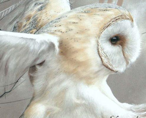 Art animalier : zoom sur le tableau ELAPHROS, une chouette effraie, réalisé avec la technique du pastel sec, avec un fond moderne et graphique. Meilleur artiste pastelliste animalier.