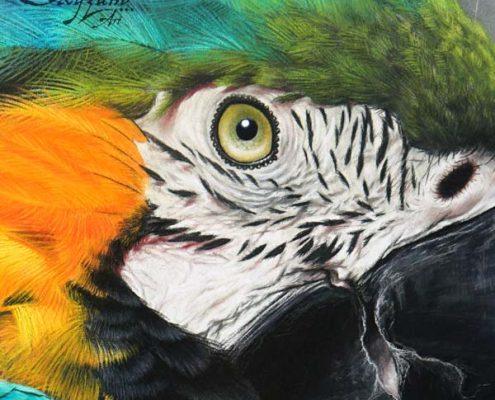dessin oiseau, tableau perroquet par SKYZUNE ART, artiste peintre équin et animalier, art de luxe, meilleur artiste animalier